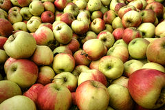 Natural Organic Apples in Bulk at Farmer Market Royalty Free Stock Image