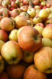 Natural Organic Apples in Bulk at Farmer Market Stock Photos