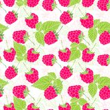 Natural organic berries seamless pattern with raspberries Stock Photo