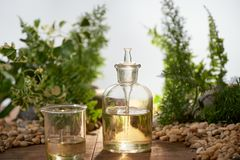 Natural organic botany and scientific glassware royalty free stock photo