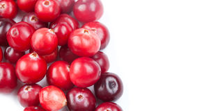 Natural, organic cranberry. close-up photo Stock Image