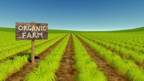 Natural organic eco farm green field. Rural landscape with wooden board `Organic Farm` among rows of natural green agricultural crops on eco farming field Royalty Free Stock Photos