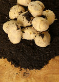 Natural organic fresh potatoes Stock Images