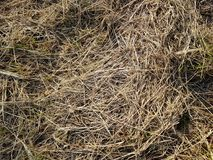 Natural organic hay straw background, grass texture. Agriculture surface plant stock images