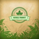 Natural Organic Herbal Vector Composition Royalty Free Stock Image