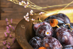 Natural organic plums in copper basin. Rustic style. Natural organic plums in copper basin. Rustic country style stock photo