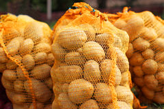 Natural Organic Potatoes in Bulk at Farmer Market Stock Image