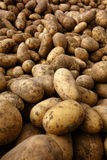 Natural Organic Potatoes in Bulk at Farmer Market stock images