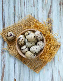 Natural organic quail eggs Stock Photos