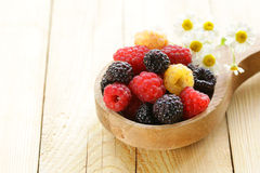 Natural organic raspberries Royalty Free Stock Photos