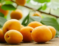 Natural organic ripe apricots Stock Photo
