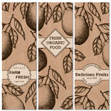 Natural organic tropical fruits vertical banners set of hand-drawn pomelo design template. Vector illustration Royalty Free Stock Image