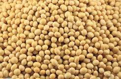 Soybean Background. Natural Organic Yellow Soybean Background royalty free stock photography