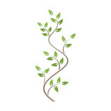 Natural ornamentation with ivy royalty free illustration