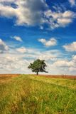 Natural background for wallpaper, single tree with amazing blue cloudy sky. Natural outdoor background with single tree in the field and amazing blue sky with royalty free stock images