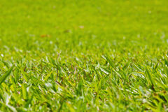 Natural outdoor green grass, shallow dof Stock Images