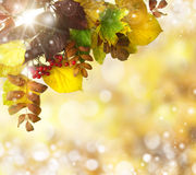 Natural outdoors bokeh in golden autumn tones Stock Photography