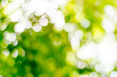 Natural outdoors bokeh in green and yellow tones Stock Photography
