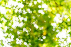 Natural outdoors bokeh in green and yellow tones Royalty Free Stock Images