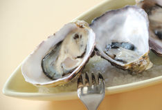 Natural Oysters Stock Photos