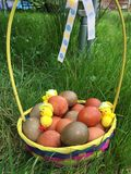 Natural Painted Easter Eggs Arrangement in a Basket Stock Photos