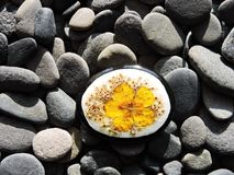 Natural painted stone with yellow dried flower stock images