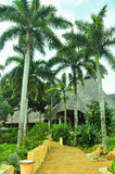 Natural palm tree village in Africa. With tall exotic trees, eco houses with hay roofs Royalty Free Stock Photo