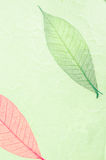 Natural paper structure made from dried leaves. Royalty Free Stock Photo