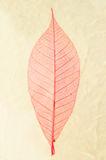 Natural paper structure made from dried leaves. Royalty Free Stock Images