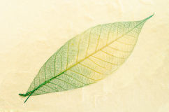 Natural paper structure made from dried leaves. Recycle paper concept stock photography