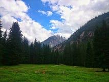 Natural Park of Ampezzo Dolomites Royalty Free Stock Photos