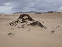 Natural-park, Corralejo beach, Fuerteventua, Canary Islands, Spa Royalty Free Stock Image