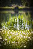 Natural park with grass and the lake Stock Images