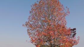 Natural Park in Japan-trees Royalty Free Stock Photos