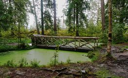 Wooden bridge over the forest lake. In the natural park `Monrepo` in the city of Vyborg there is a forest lake, tightened with mud. Through it a bridge made of Royalty Free Stock Photos