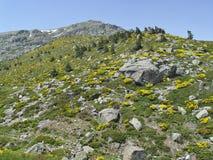 Natural Park Peñalara, Madrid, Spain. A few kilometers from Madrid, stands the Sierra de Guadarrama. The highest peak is the peak Peñalara (2428 meters Stock Images