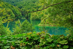 Natural park Plitvice. Picture presents Plitvice natural park Royalty Free Stock Photos