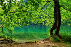 Natural park Plitvice 2 Royalty Free Stock Image