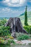 Natural park Royalty Free Stock Photos