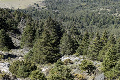 Natural parks in Spain, Sierra de las Nieves in the province of Malaga, Andalucia Royalty Free Stock Images