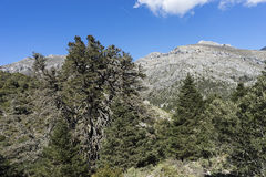 Natural parks in Spain, Sierra de las Nieves in the province of Malaga, Andalucia Royalty Free Stock Photo