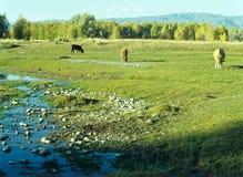 Natural pasture Stock Image