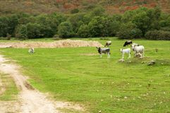 Natural pastures on the island of Krk Stock Photo