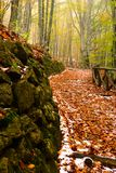 Natural path Stock Photo