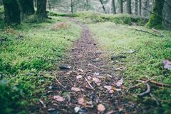Natural Path in Forest Stock Photography