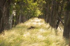 Natural path stock photography