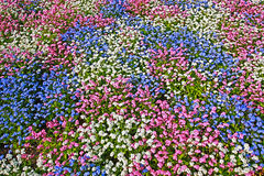 Natural pattern with 3 colour flowers Royalty Free Stock Image