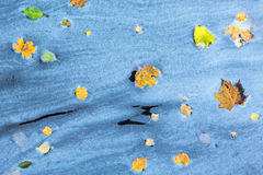 Natural pattern with autumn leaves Stock Photo