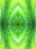 Natural pattern made of palm leaves. Natural pattern made of green palm leaves Stock Images
