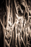Natural pattern of roots tree with under exposure style Royalty Free Stock Image